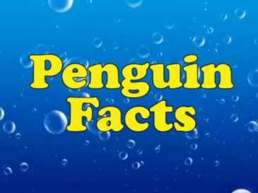 penguinfacts